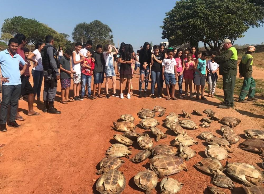 PM flagra captura ilegal e liberta 60 tartarugas na Região do Araguaia
