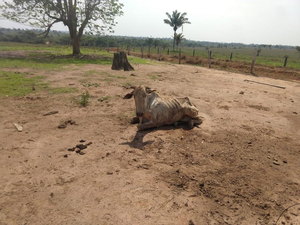 Patrulha Rural da PM resgata 30 animais em situação de maus-tratos em MT